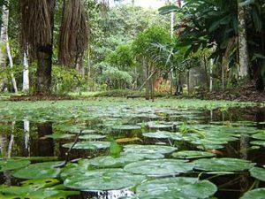 Lagos de la Amazonía